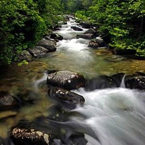 flowing-river-n-leaves-1-big